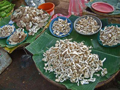 VientianeD233