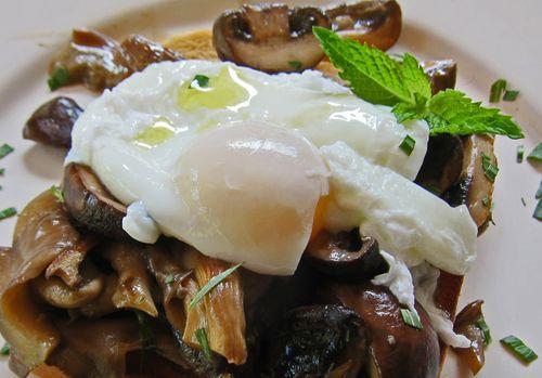 Mushroom Ragout Poached Egg 05