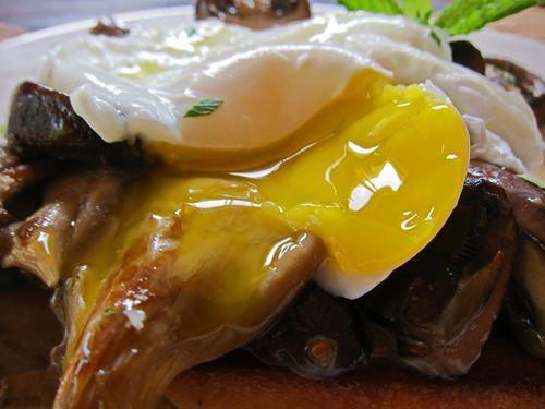 Mushroom Ragout Poached Egg 06