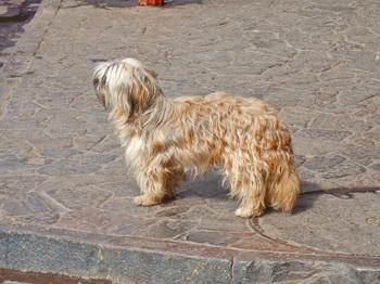 Peru1_093