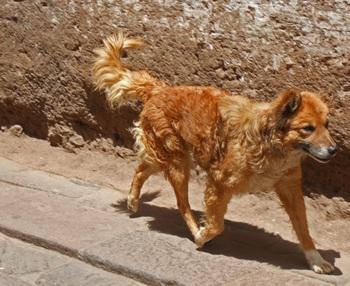 Peru1_105