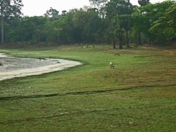 Cambodia200801_102