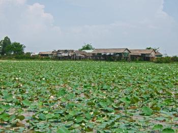 Cambodia200801_341_2