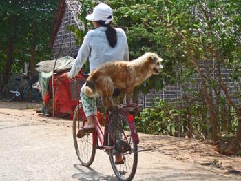Cambodia200801_345