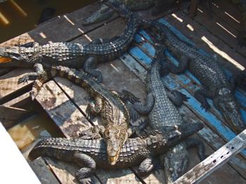 Cambodia200801_384