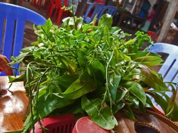 Cambodia200801_461